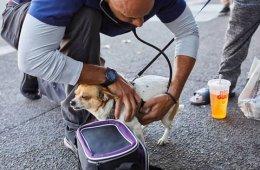 Калифорнийский ветеринар ходит по улицам и бесплатно лечит животных бездомных людей (13 фото)