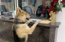 Пес пришел в полицейский участок, чтобы заявить о пропаже самого себя (3 фото)
