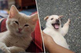Собаки и кошки, которые, наконец, нашли свой новый дом (31 фото)