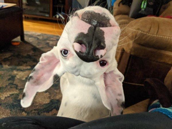 Мне кажется или собака сломалась картинка