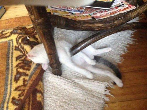 25 фотографий, наглядно доказывающих, что кошки могут заснуть в любом месте и в любой позе