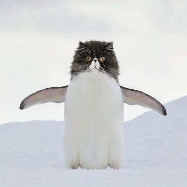 Коты везде