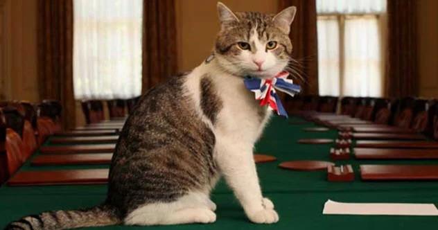 Топ-10: Самые неожиданные должности, которые когда-либо занимали кошки
