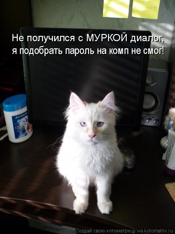 Свежая котоматрица для хорошего настроения (26 фото)