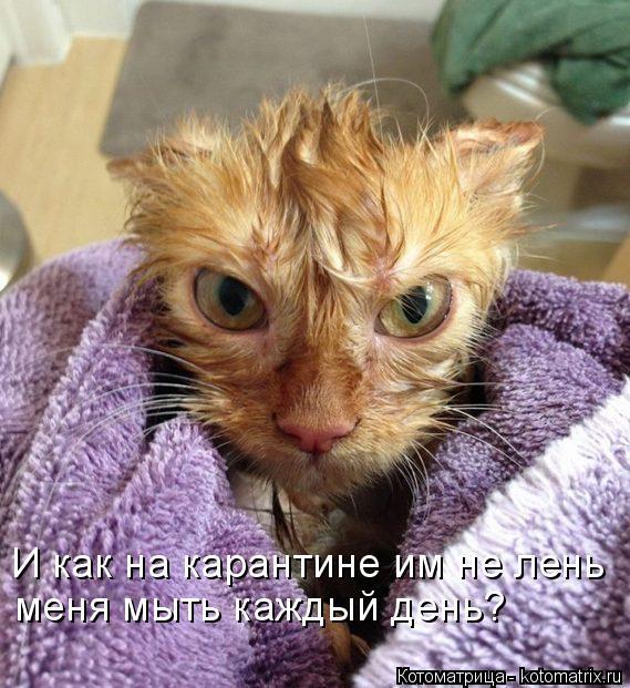 Новая котоматрица для хорошего настроения (20 фото)