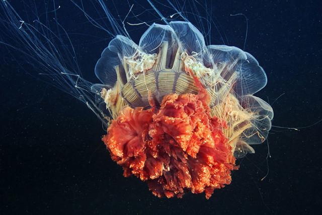 Фотографии Александра Семёнова с невероятными подводными обитателями, которые лишний раз доказывают, что океан — это параллельная вселенная