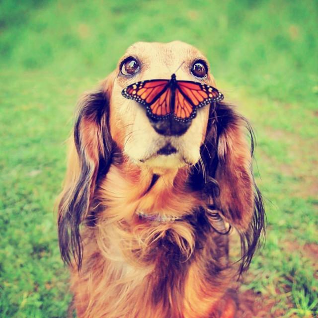 Стартовал конкурс на самую смешную фотографию домашнего животного 2020 Comedy Pet Photo