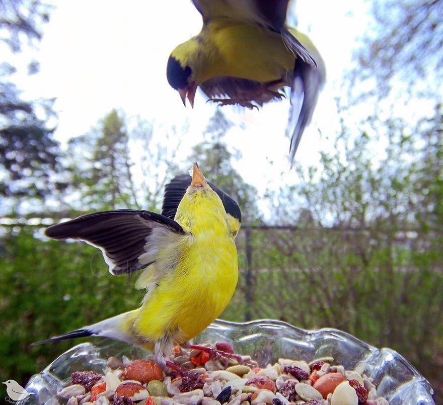 как фотографировать птицу отметило, что течение