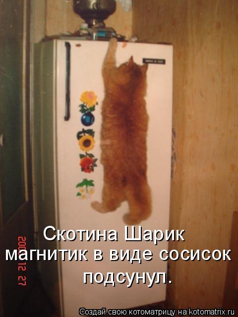 Свежая котоматрица (15 фото)