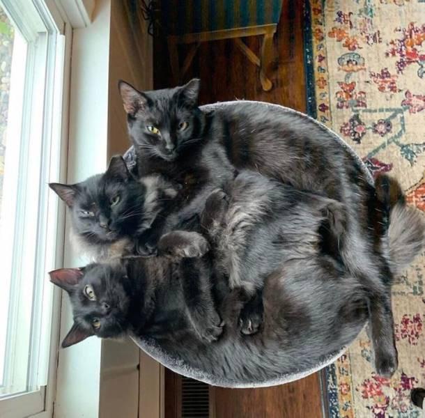 Кошки, которым удобно везде (17 фото)