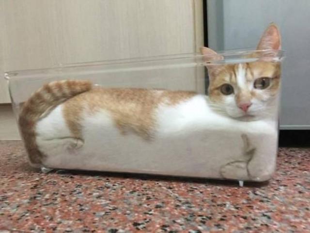 Кошки, которым удобно везде. ФОТО