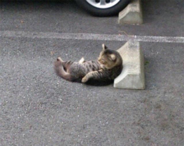 Кошки обожают лежать на парковочных барьерах. По всему миру
