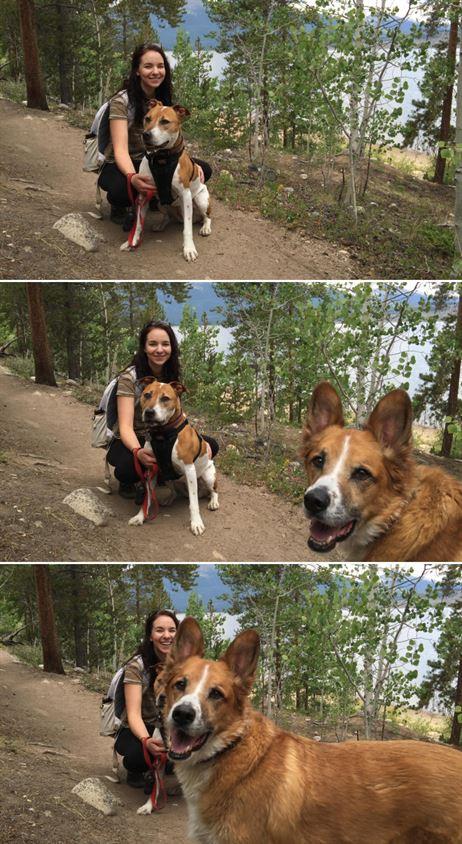 Собаки — тоже идеальные бомбардировщики (19 фото)