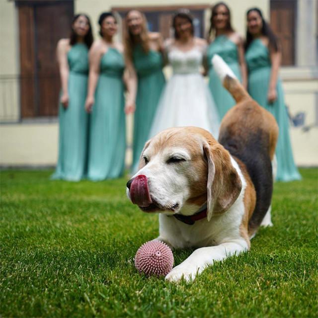 Собаки — тоже идеальные бомбардировщики. ФОТО