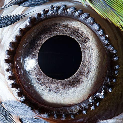 Глаза животных крупным планом через объектив армянского фотографа Сурена Манвеляна (15 фото)