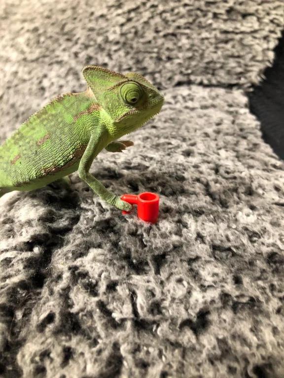 Ничего необычного — просто ящерица, которая каждый день держит что-то новое