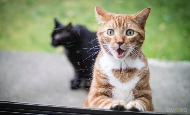 Неудачные фотографии кошек, которые они наверняка попросили бы удалить