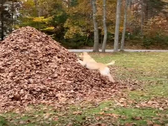 За что собаки любят осень