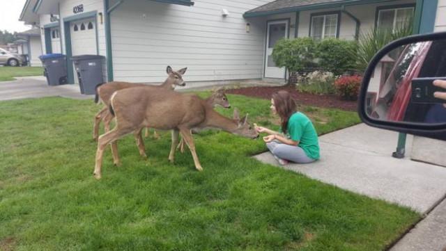 Дружелюбные дикие животные, которые решили познакомиться с людьми поближе