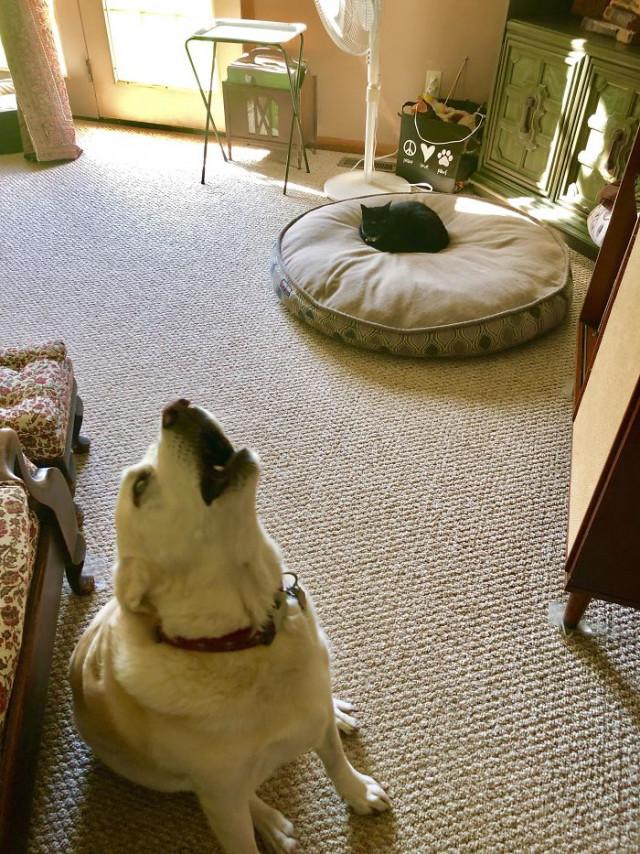 Непростые отношения между кошками собаками. ФОТО