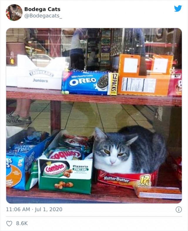 Милые кошки живущие в магазинах. ФОТО