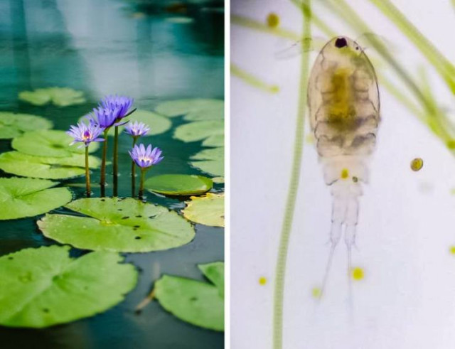 Фотографии, раскрывающие, как повседневные вещи выглядят под микроскопом