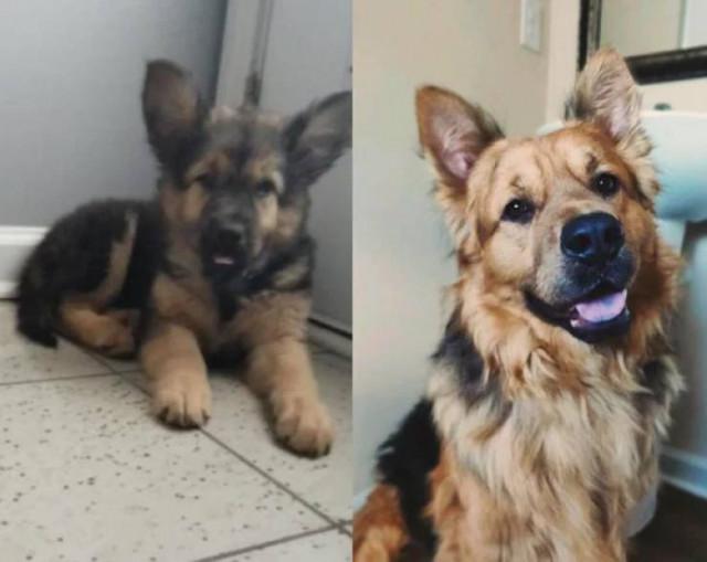 Очаровательные собаки тогда и сейчас