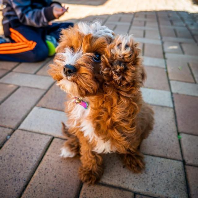 Очаровательные щенки, которые вызовут улыбку и поднимут настроение. ФОТО