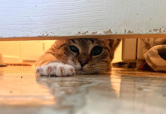 Кошки, которым плевать на личное пространство хозяев. ФОТО