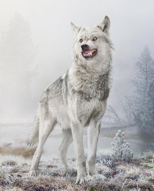 Величие животного мира в удивительных фотографиях Симена Йохана