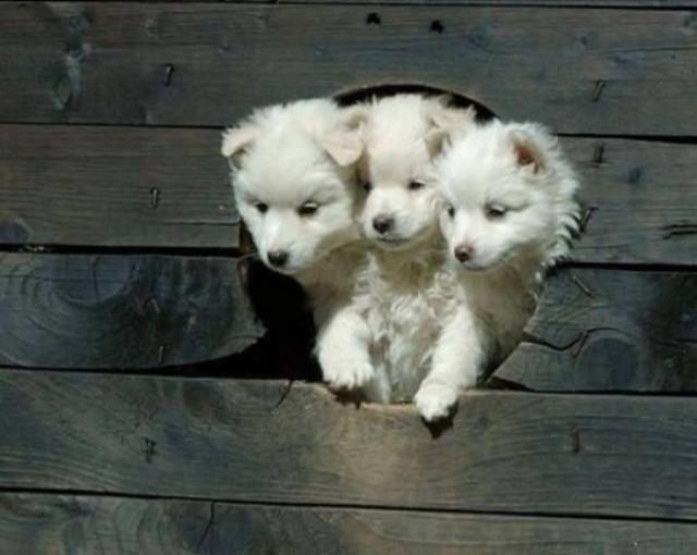 Очаровательная щенята, которые вызовут вашу улыбку. ФОТО