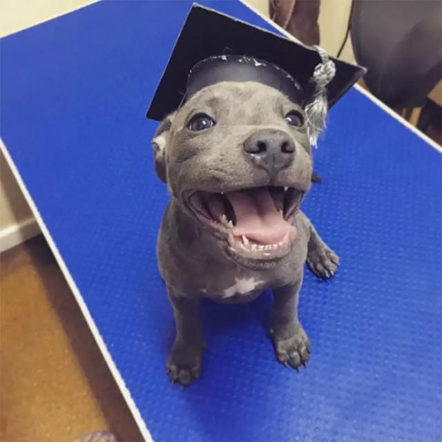 Очаровательные щенята, которые вызовут улыбку. ФОТО
