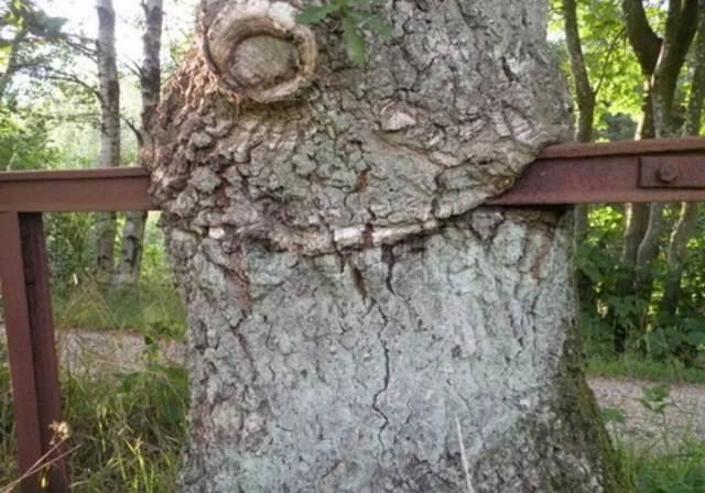 Ом-ном-ном, или 24 дерева, на пути которых лучше не попадаться