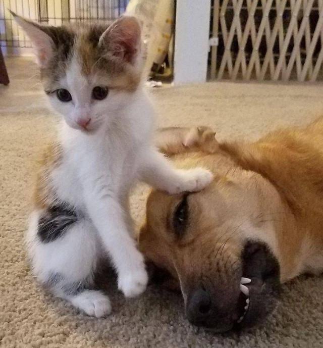 Милые эмоции и настроение животных. ФОТО