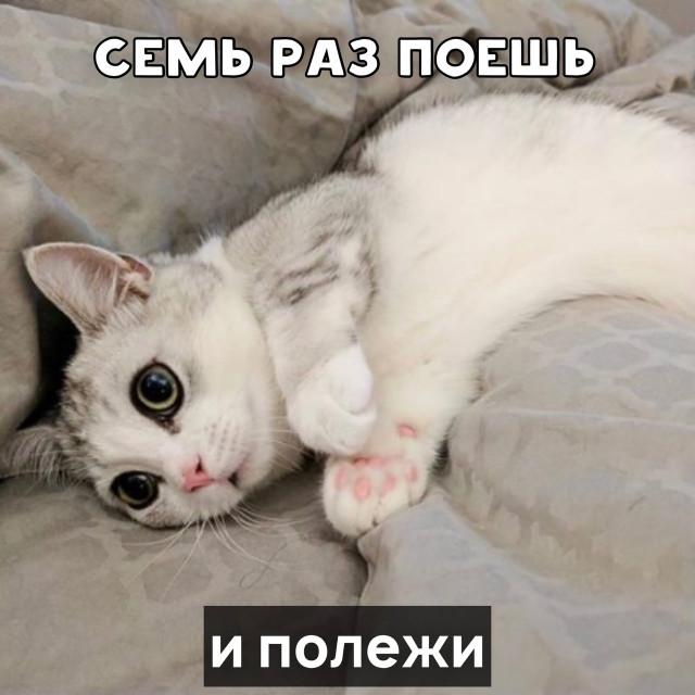 Котячьи пословицы и поговорки. ФОТО