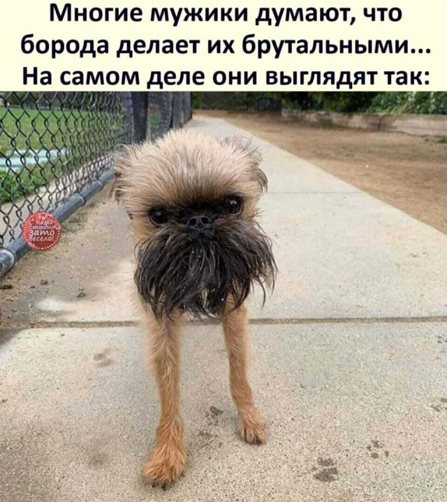 1606431062_prikoly-6.jpg