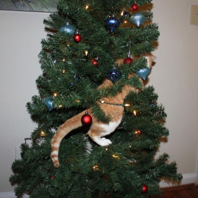 Кошки против новогодних ёлок. ФОТО