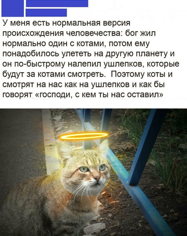 1606995210_prikol-7.jpg