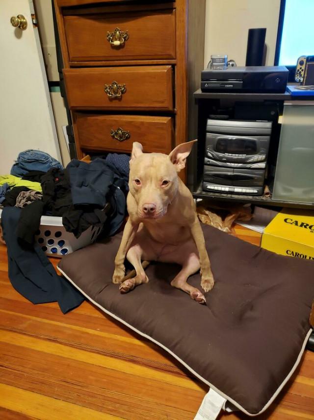 """14 собак, которые \""""сломались\"""" и требуют \""""перезагрузки\"""". ФОТО"""