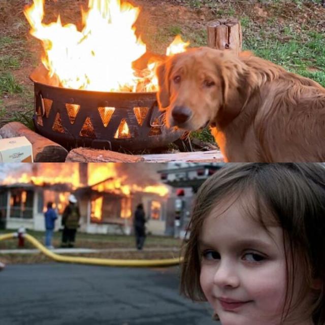Собаки, похожие на что-то (или кого-то) ещё. ФОТО