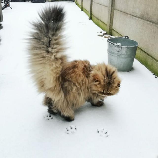 Котики максимальной степени пушистости. ФОТО