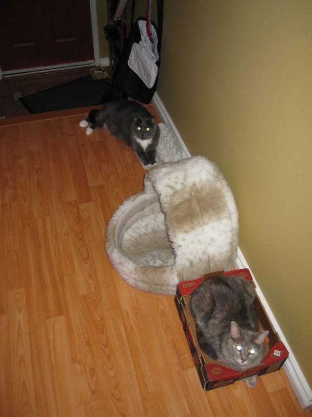 Приколы про лежаки и кошачью логику. ФОТО