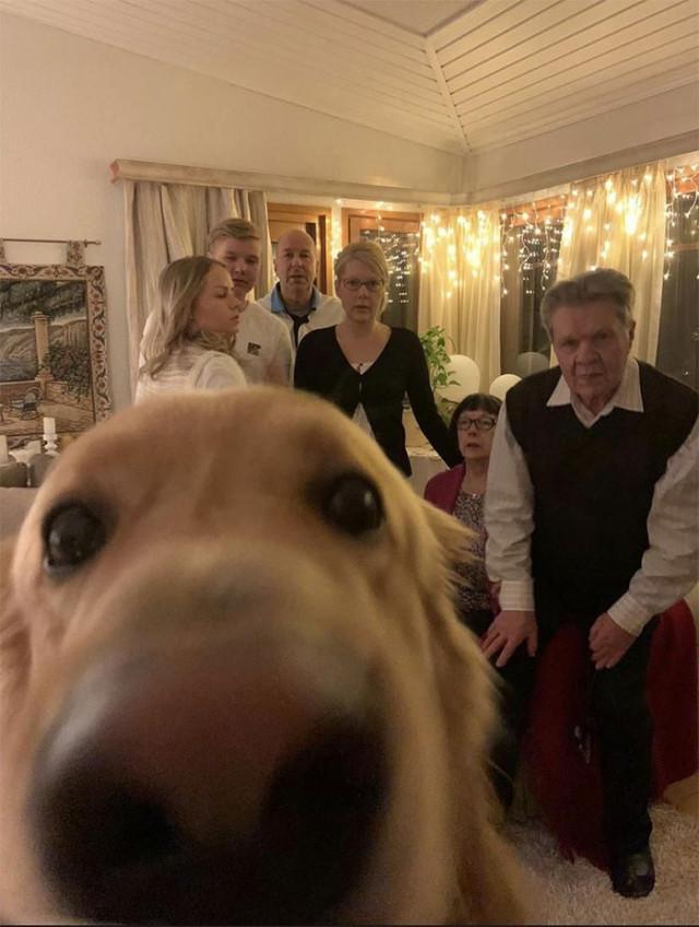 26 рождественских фотобомб с участием собак