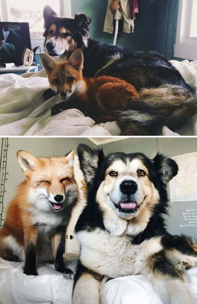 Примеры дружбы между животными, которые растопят ваше сердце. ФОТО