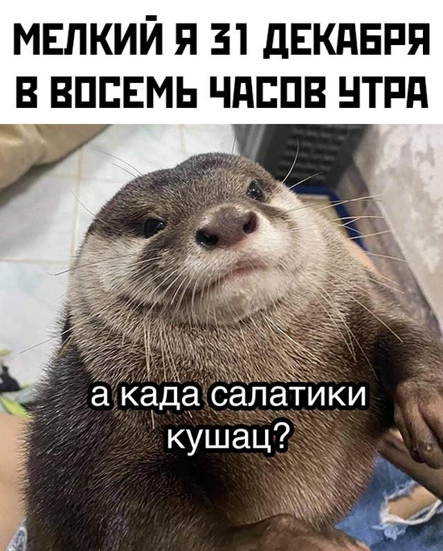 1609542253_prikoly-18.jpg