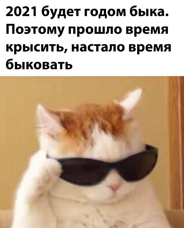 1609542300_prikoly-9.jpg