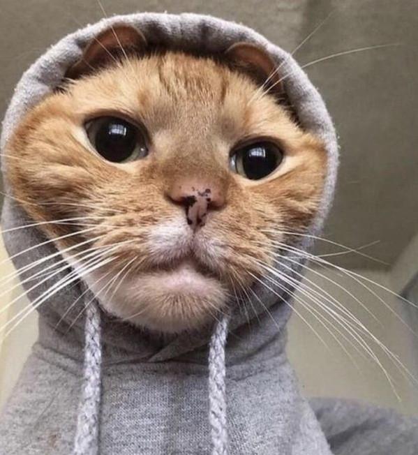 Забавные котики — лучшее украшение вашей ленты. ФОТО