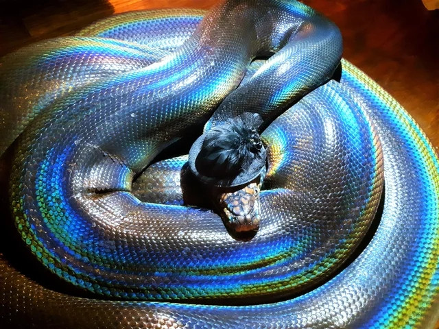 Оказывается, змеи в головных уборах такие очаровашки!