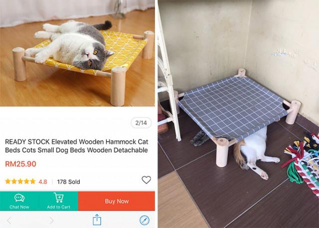 Про кошек, лежаки и кошачью логику