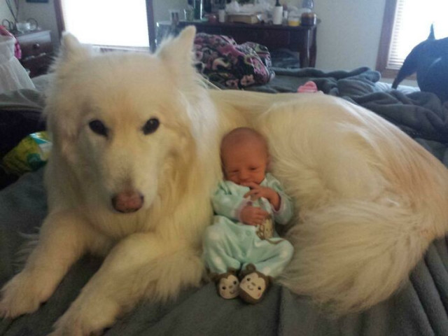 Ещё 33 фотографии, наглядно показывающие, почему в доме, где растёт ребёнок, должна быть собака